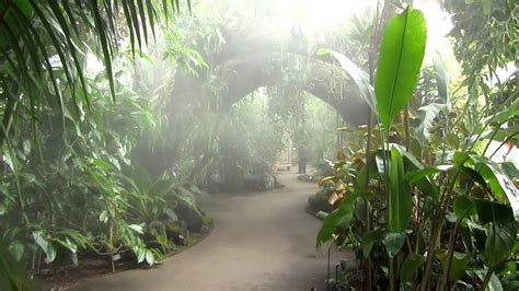 nybg haupt conservatory tropical rainforest youtube