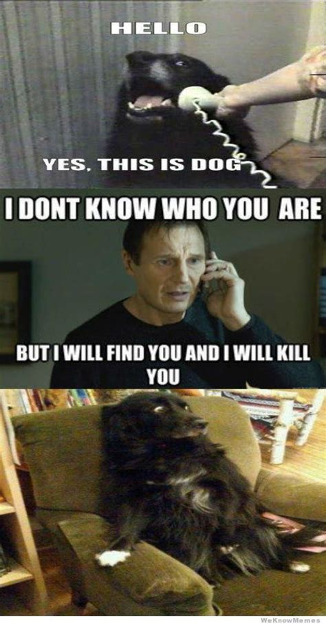 Hello This Is Dog Meme - i don t know who you are but i will find you and kill you