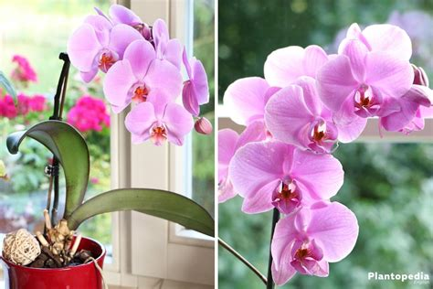 orchids facts 100 orchids facts secrets of the orchid mantis