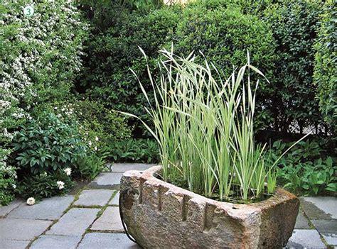 piante acquatiche in vaso piante acquatiche come sceglierle piantarle e curarle