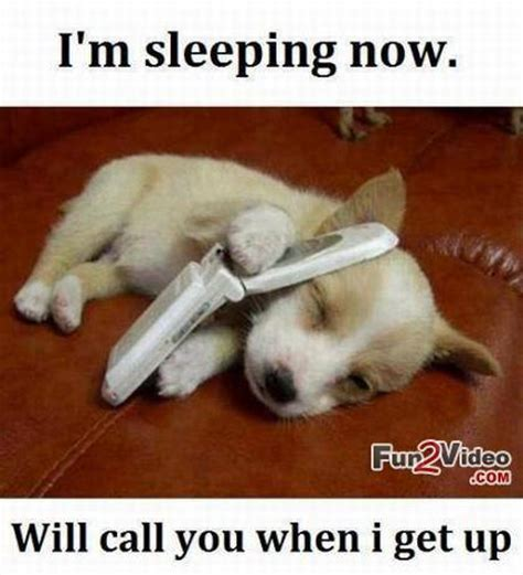 Dog Phone Meme - cute animal love memes image memes at relatably com