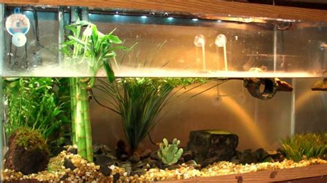 turtle decorations for home planted turtle tank quot red ear slider quot res with home made