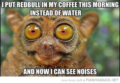 Funny Monkey Memes - funny monkey memes redbull in my coffee funny as duck