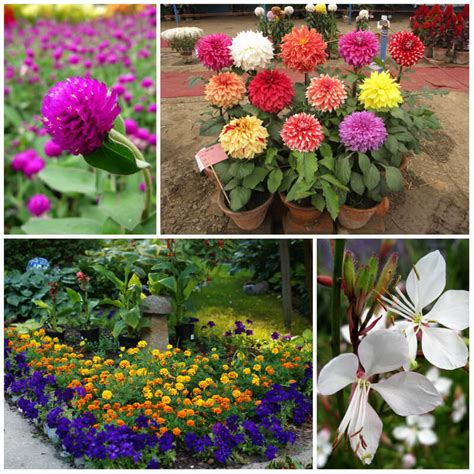flowering shrubs that bloom all summer 17 stunning plants that bloom all summer remodeling