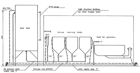 fish hatchery layout construction of trout and carp hatcheries