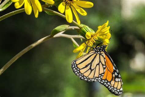Die Sch Nsten Schmetterlinge 4950 by Fotoparade Die Sch 246 Nsten Fotos Aus 2017 Ai See The World