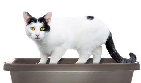 cat using bathroom outside litter box cat going to bathroom outside of litter box 28 images