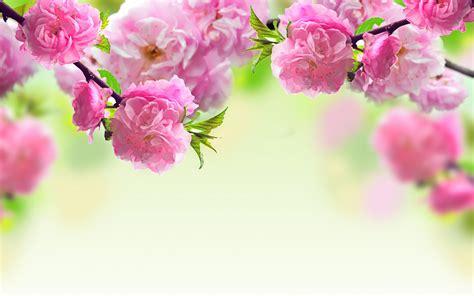 sfondi primavera fiori fiori di primavera sfondo hd wallpaper widescreen alta