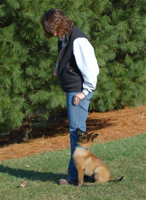 obedience for dogs leerburg obedience dogs