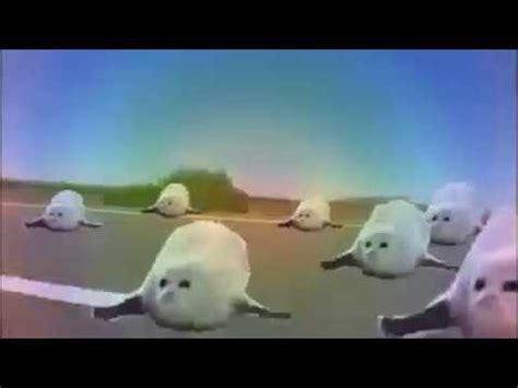 Bouncing Seal Meme bouncing seals meme