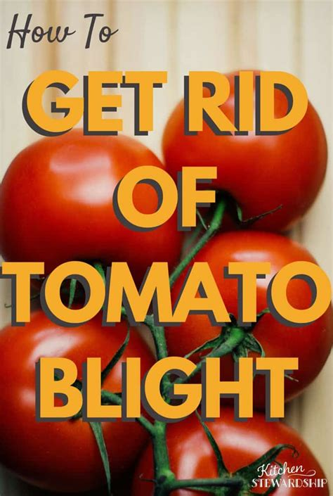 Get Rid Of The Summer Cake Look 2 by How To Get Rid Of Tomato Blight And Prevent It Next Year