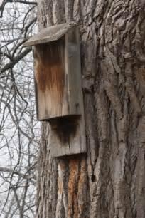 backyard bat house how to build a bat house