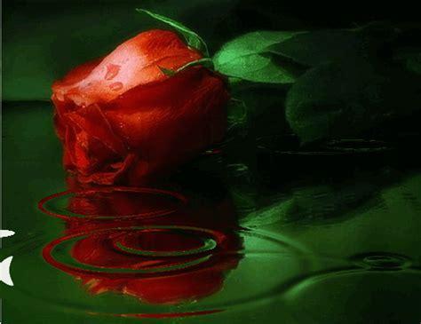 imagenes de rosas brillantes con movimiento 4 rosas brillantes para facebook y google plus