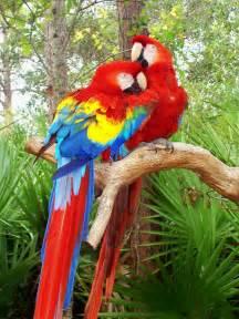 parrot animal wildlife