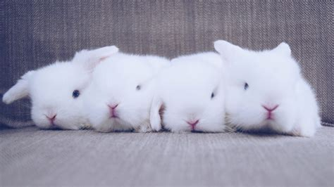 Bantal Peyang Baby Rabbit Blue white bunny with blue www pixshark images galleries with a bite