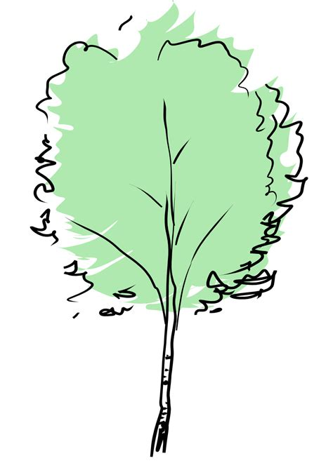 beech tree coloring page clipartist net 187 clip art 187 beech wall paper scallywag
