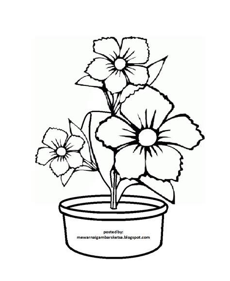 sketsa gambar bunga anggrek  pot sempoa dunia
