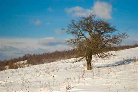 winter tree winter tree