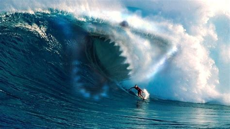 the gallery for gt real shark attacks on people
