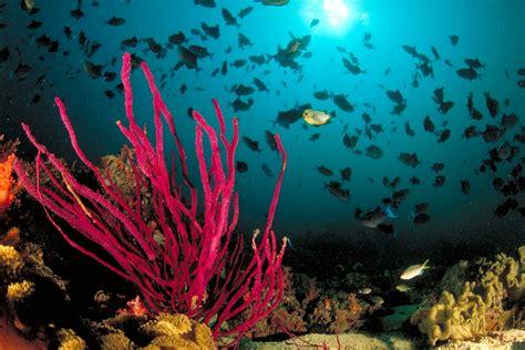 dive oman diving in oman scuba diving scubaverse