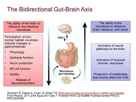 gut intelligence the wisdom to the the guts to do something about it books microbiota regulation of the mammalian gut brain axis