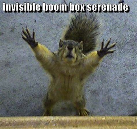 Dead Squirrel Meme - 13 funny squirrel photos and memes craveonline