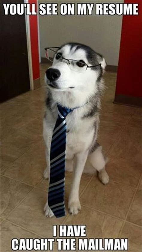 Funny Husky Meme - attack of the funny animals with captions 24 pics