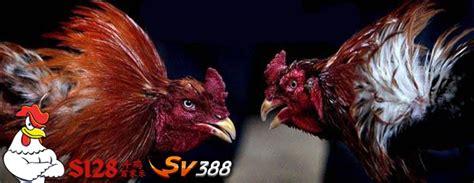 judi sabung ayam   resmi terpercaya asiabetking