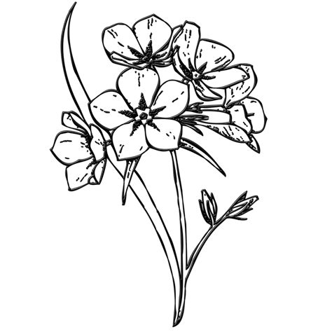 Stabillo Flower Stabillo Motif Bunga free illustration flowers bunch buds floral free