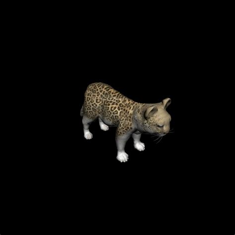 domain leopard image the graphics leopard cub free stock photo domain pictures