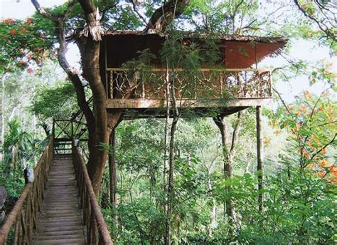 coolest treehouse in the world the world s best treehouse hotels tree houses tree