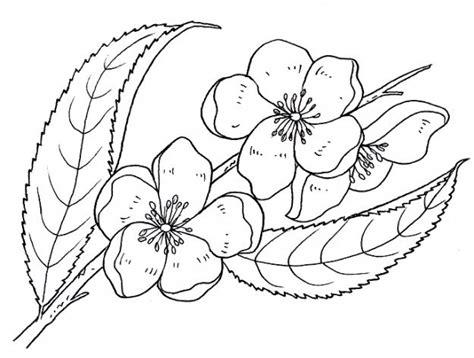 imagenes bonitas para colorear de flores dibujo para colorear flores primaverales bonitas dibujos