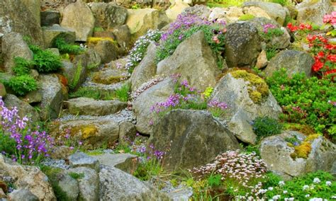Plants For A Rock Garden Your Guide To Choosing Rocks And Plants For A Rock Garden Smart Tips