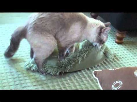 cat humps pillow hostzin search engine