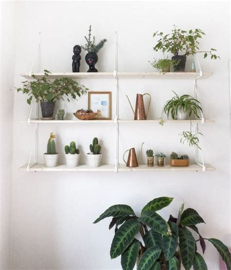 plants plant shelves and shelves on