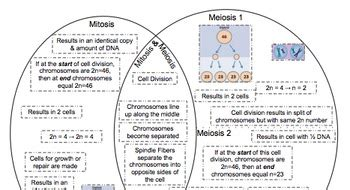 meiosis vs mitosis venn diagram venn diagram meiosis mitosis by ruizscience teachers pay teachers