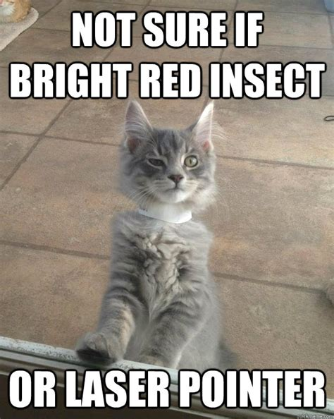 Laser Pointer Meme - not sure if bright red insect or laser pointer skeptical