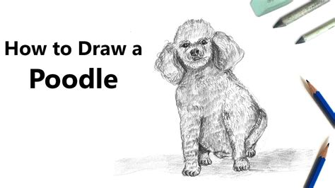 how to draw doodle 4 how to draw a poodle with pencils time lapse