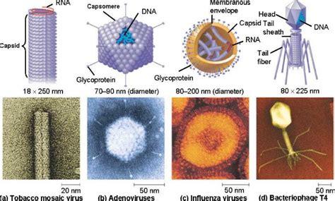 membuat virus biologi pengertian umum virus dan ciri ciri virus dalam ilmu