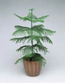 1 christmas tree send christmas tree for any occasion
