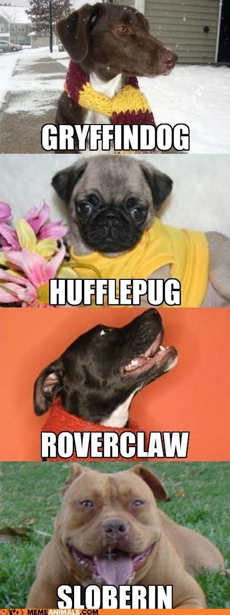 harry potter puppy dogs harry potter random