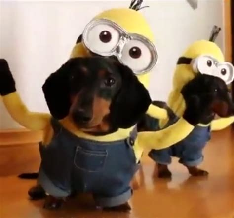 puppies in costumes dogs in costumes www pixshark images galleries with a bite