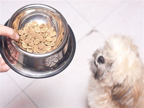 recommended food for shih tzu what is the best way to feed your shih tzu with allergies