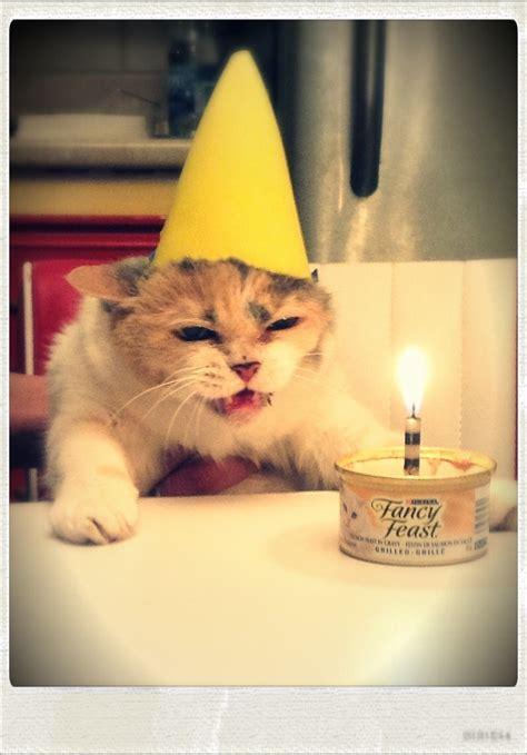 hilarious ways cats   deal  humans catzilla guff