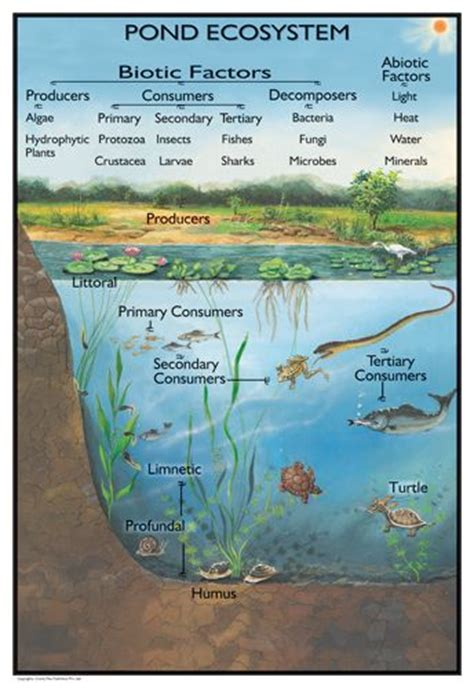 the biology of lakes and ponds biology of habitats series books 17 best images about m zoology on biology