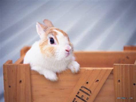 Gantungan Bunny Kopenhagen Bunny 1 桌布天堂 寵物寶貝 三 可愛兔子5