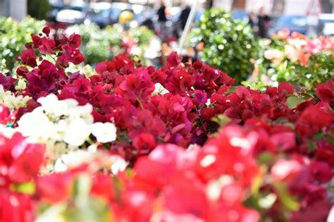 mostre di fiori mostra mercato di piante e fiori sienacomunica