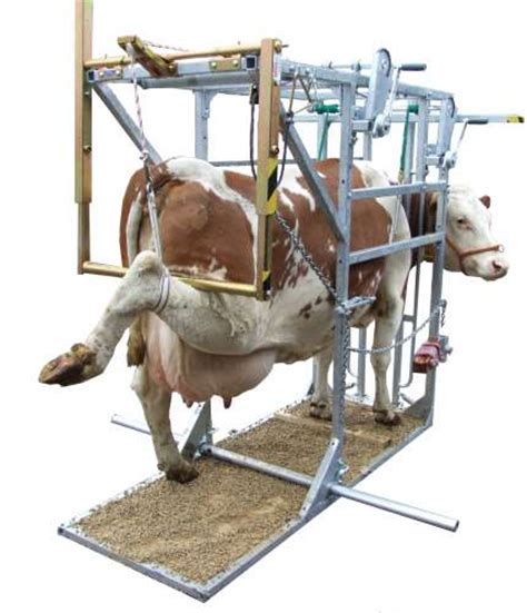 cattle hoof trimming table for sale sa0026 plus e hoof trimming crush chute for cows