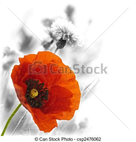 stock photo of red poppy floral design red poppies on a