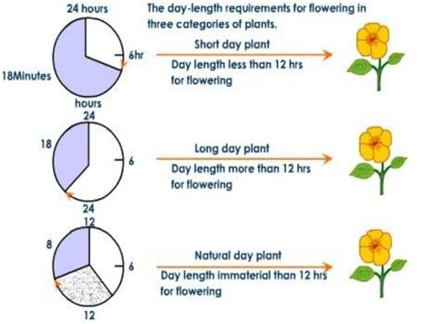 s day length photoperiodism
